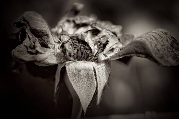 Photograph - All But Gone by Alice Gipson