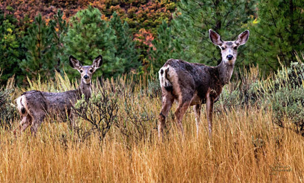 Bambi Mixed Media - All Ears by David Millenheft