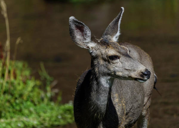 Photograph - All Ears by Robert Potts