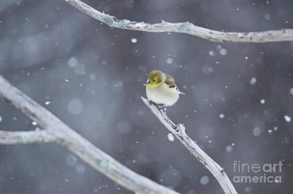 Photograph - All Fluffy by Wanda Krack