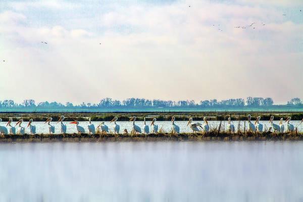 Marsh Bird Digital Art - All In A Row by Terry Davis