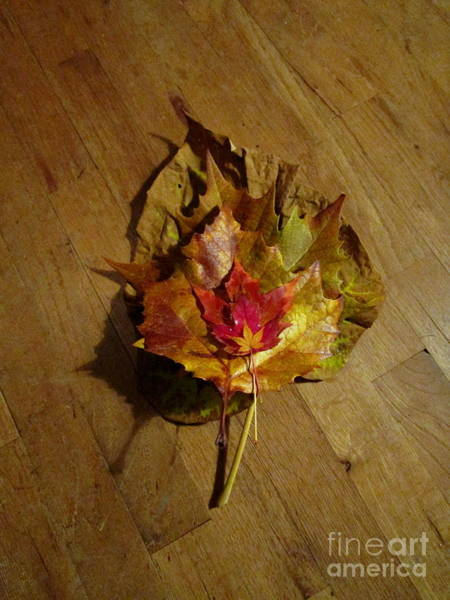 Photograph - All Leaves Great And Small by Marie Neder