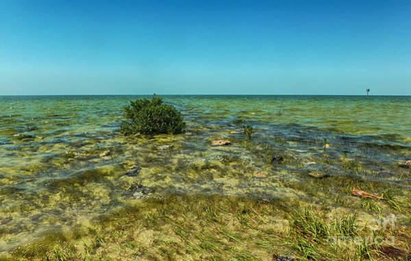Photograph - All Natural Shoreline by Judy Hall-Folde