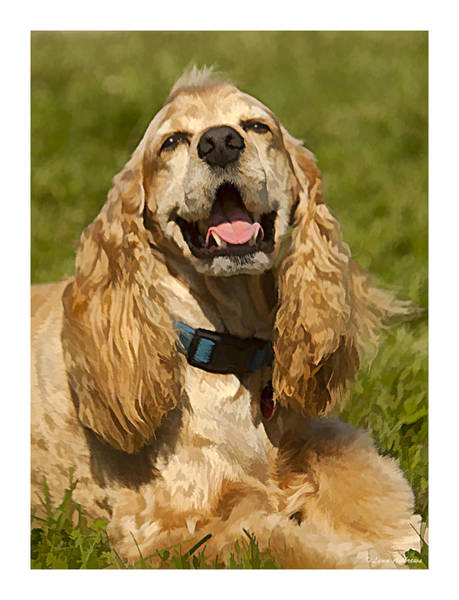 Cocker Spaniel Photograph - All Smiles by Lynn Andrews