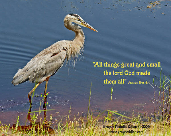 Photograph - All Things Great And Small by Grace Dillon