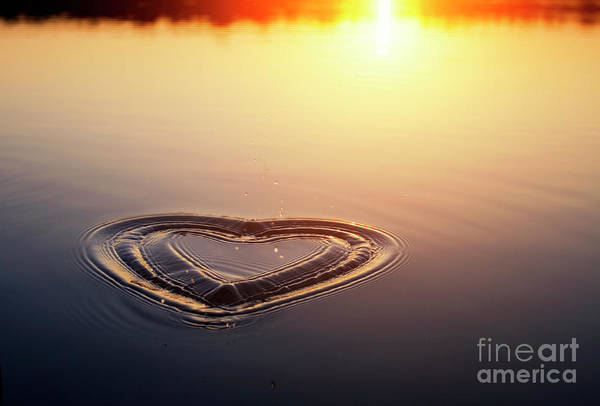 Wall Art - Photograph - All We Need Is Love by Tim Gainey