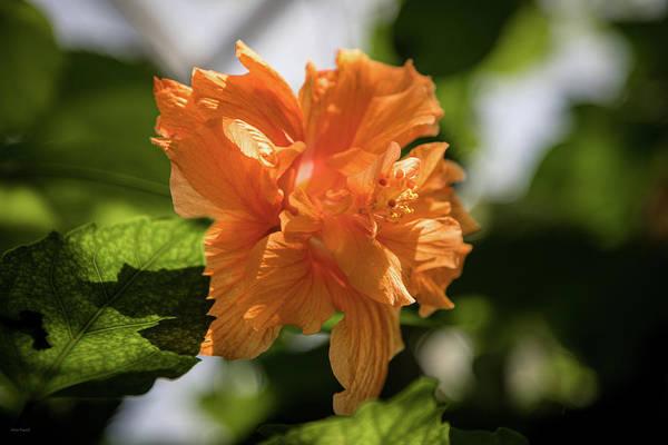 Photograph - Allan Gardens Orange by Ross Henton