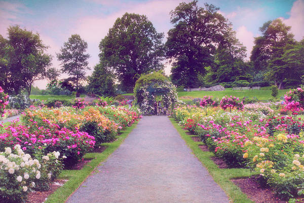 Photograph - Allee Of Roses  by Jessica Jenney