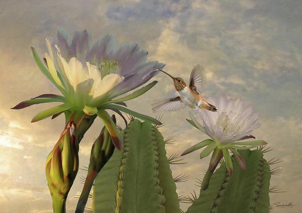 Wall Art - Digital Art - Allens Hummingbird And Cactus Flowers by M Spadecaller