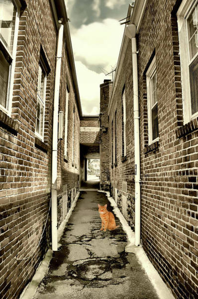 Orange County Digital Art - Alley Cat by Diana Angstadt
