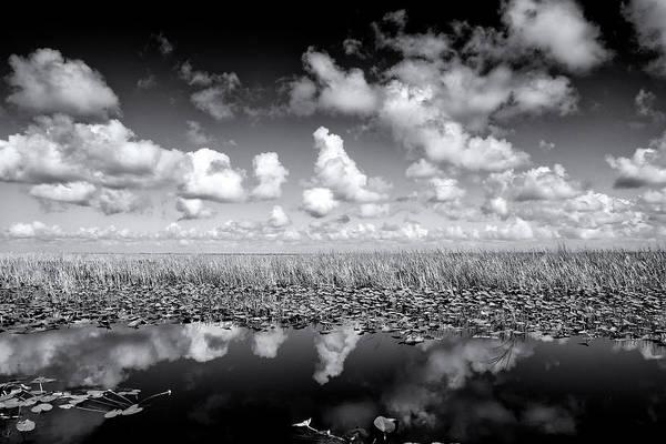 Alligator Alley Photograph - Alligator Alley by Alberto Audisio