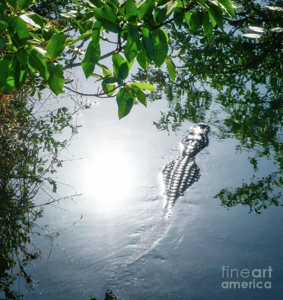Wall Art - Photograph - Alligator And Lake Reflections by DAC Photo