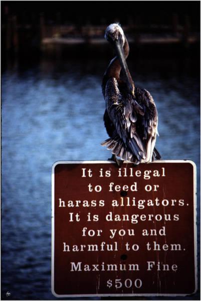 Photograph - Alligator Bait by Wayne King