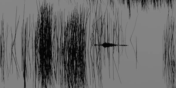 Photograph - Alligator In The Reeds by Ed Gleichman