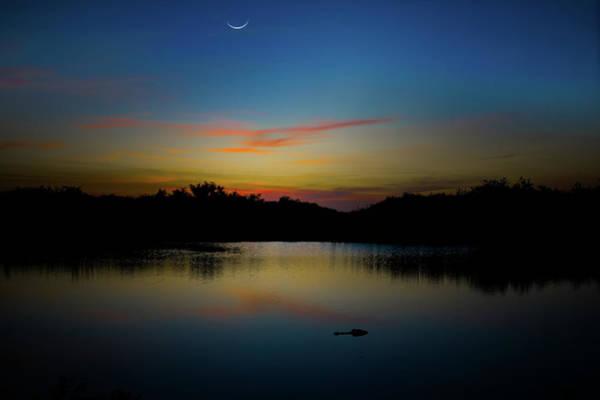 American Crocodile Photograph - Alligator Sunset by Mark Andrew Thomas
