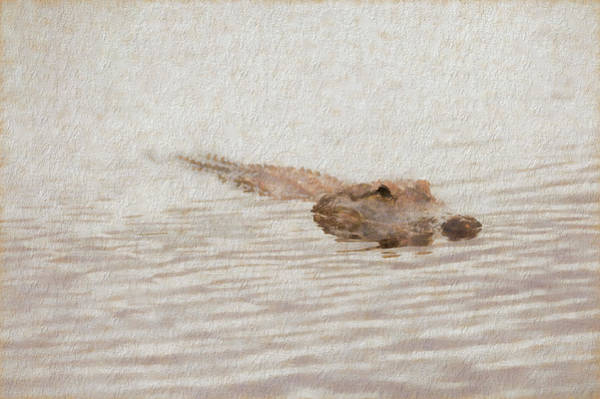 Photograph - Alligator Waiting In The Water by Dan Friend