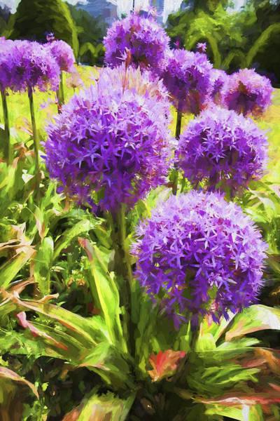 Photograph - Allium Flowers by Carlos Diaz