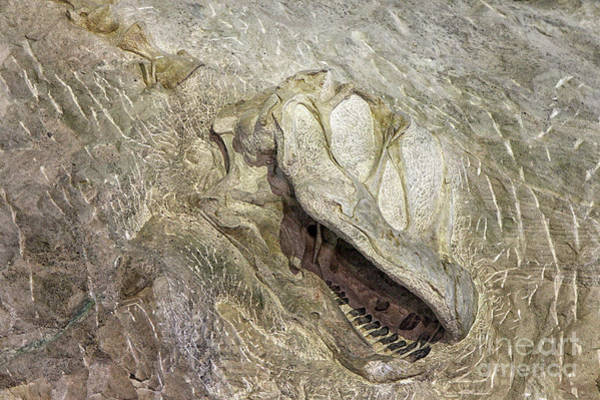 Camarasaurus Art Print