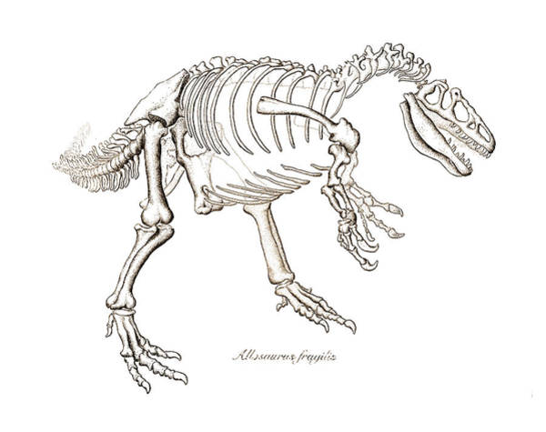 Drawing - Allosaurus Skeleton by Karla Beatty