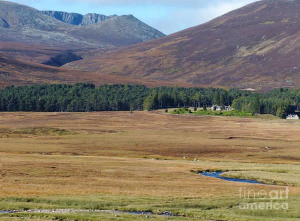Photograph - Allt Na Guibhsaich Woodland And Lochnagar by Phil Banks