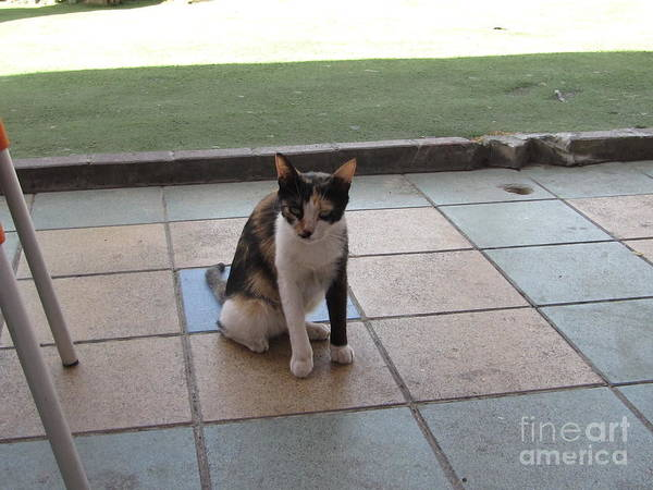 Photograph - Almog Cafe Cat by Donna L Munro