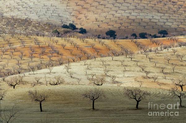 Wall Art - Photograph - Almond Plantations by Heiko Koehrer-Wagner