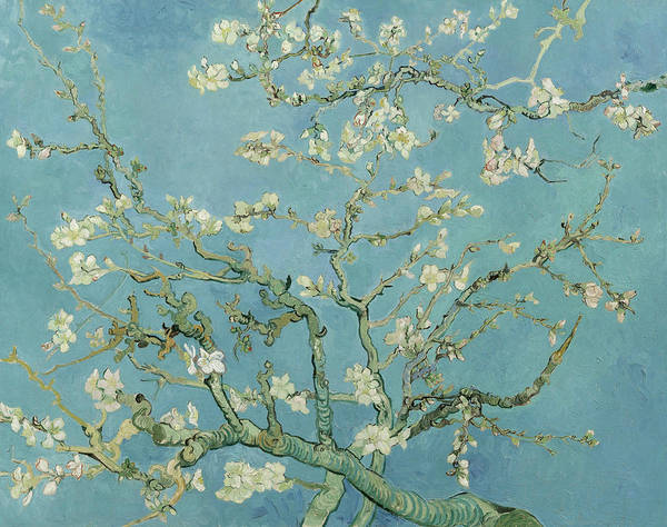 Almond Painting - Almond Blossom by Vincent van Gogh