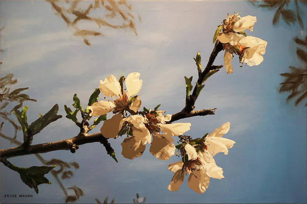Wall Art - Painting - Almond Blossoms by Jesse Waugh