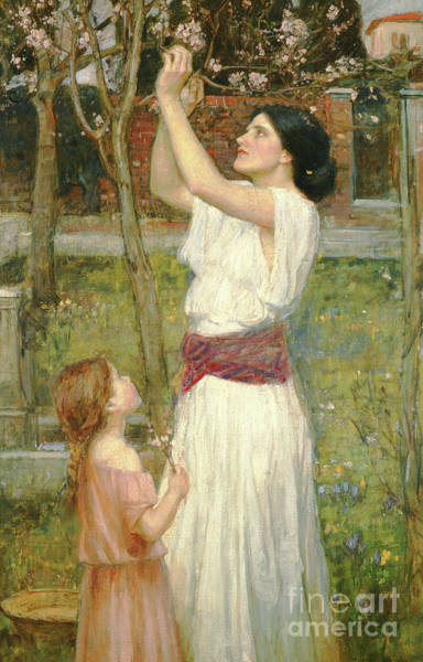 Painting - Almond Blossoms by John William Waterhouse