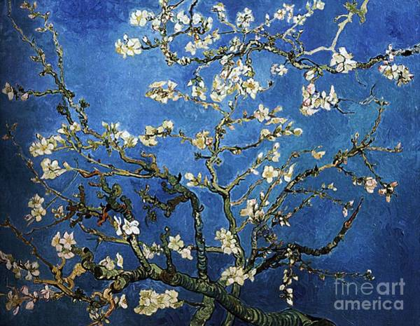 Almond Painting - Almond Tree In Blossom by Pg Reproductions