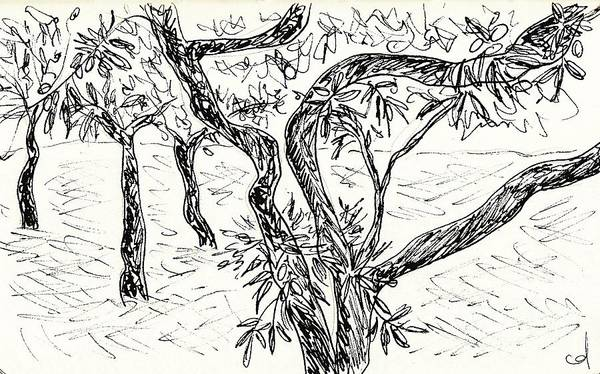 Drawing - Almond Trees In Lanjaron by Chani Demuijlder