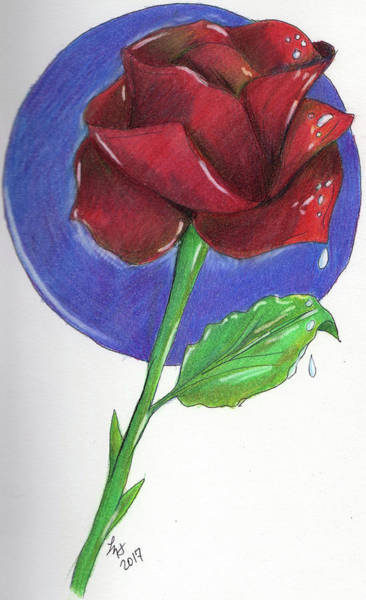 Drawing - Almost Black Rose by Loretta Nash