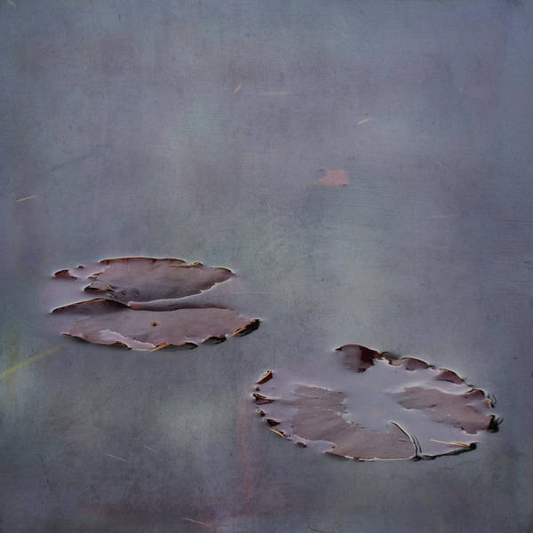 Photograph - Almost Floating by Sally Banfill