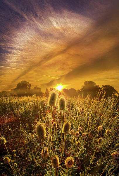 Photograph - Almost Seemed An Eternity by Phil Koch