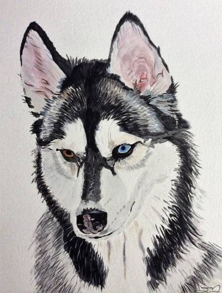 Painting - Almost Wild by Sonja Jones