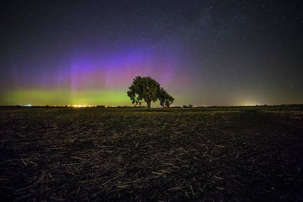 Cornfield Photograph - Alone by Aaron J Groen