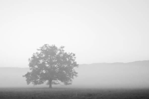 Photograph - Alone by Bob Decker