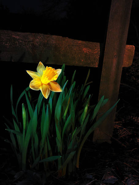Photograph - Alone In The Dark by Mark Fuller