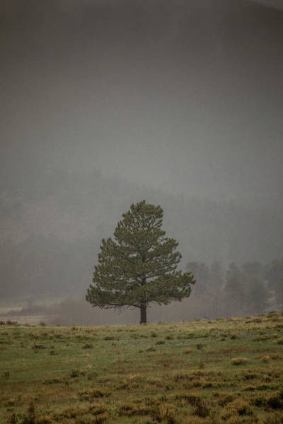 Wall Art - Photograph - Alone In The Mist by Teresa Wilson