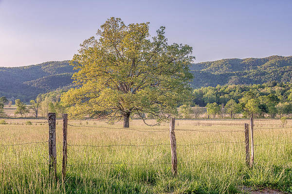 Wall Art - Photograph - Alone In The Pasture by Jeff Abrahamson