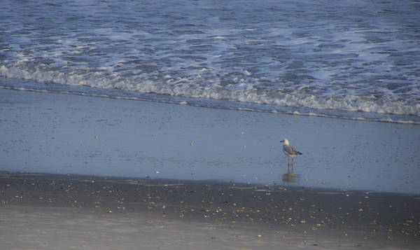 Wall Art - Photograph - Alone In The Sand by Teresa Mucha