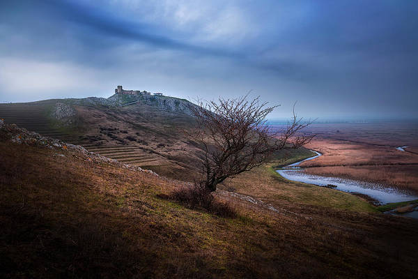 Wall Art - Photograph - Alone In The Wild by Adrian Malanca