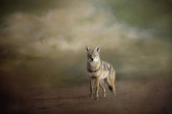 Photograph - Alone by Jai Johnson