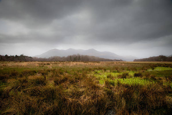 Irish Landscape Photograph - Along A Path In Killarney National Park by W Chris Fooshee