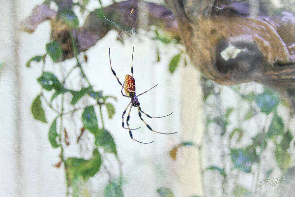 Photograph - Along Came A Spider by Bonnie Follett