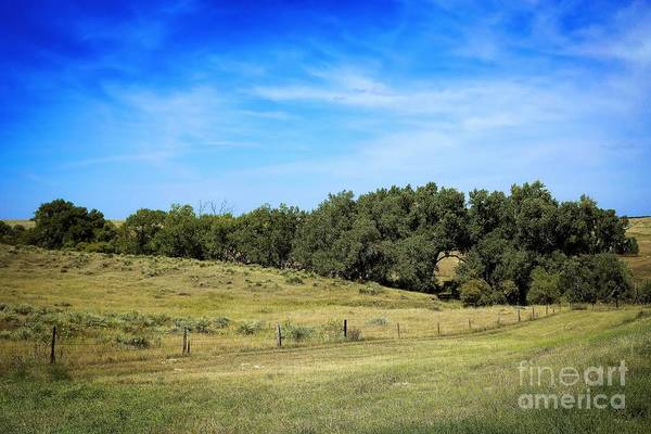Photograph - Along Cherry Creek by Jon Burch Photography