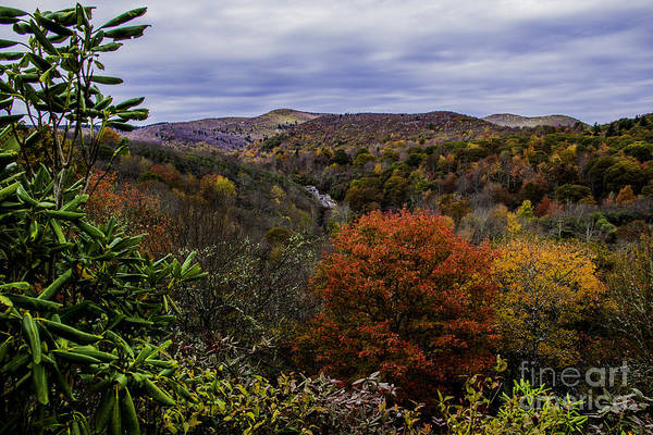 Photograph - Along The Blue Ridge Parkway by Allen Nice-Webb