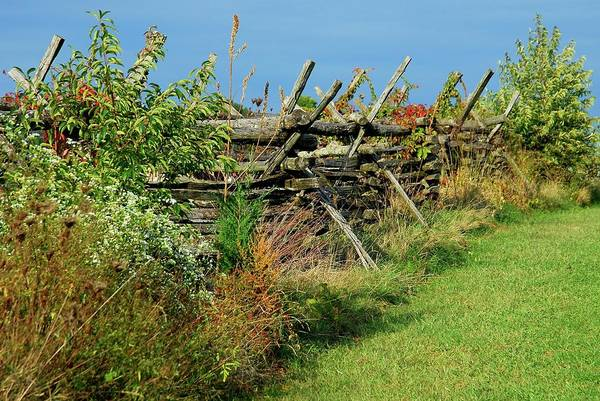 Photograph - Along The Fence - Battlefield Orchards by Angie Tirado