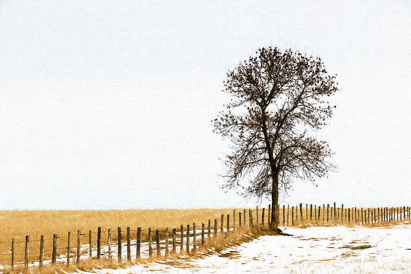 Photograph - Along The Fence Line by Lori Dobbs