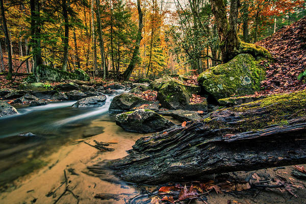 Photograph - Along The Laurel Fork by Andy Crawford